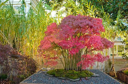 Brooklyn Botanic Garden Workshop
