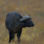 Africa Gallery: Mammals