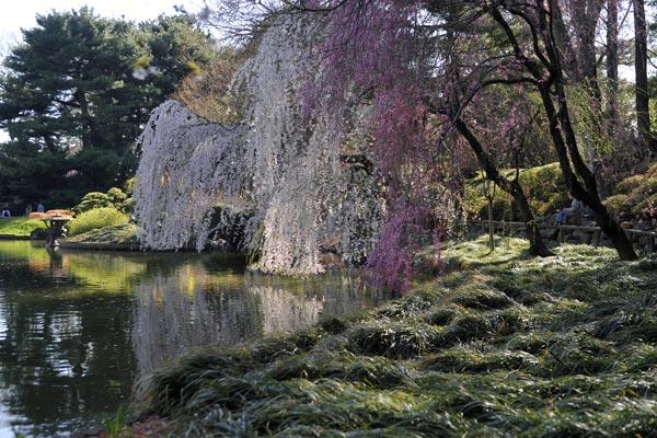 Brooklyn Botanical Garden On Pinterest Botanical Gardens Brooklyn And Gardens