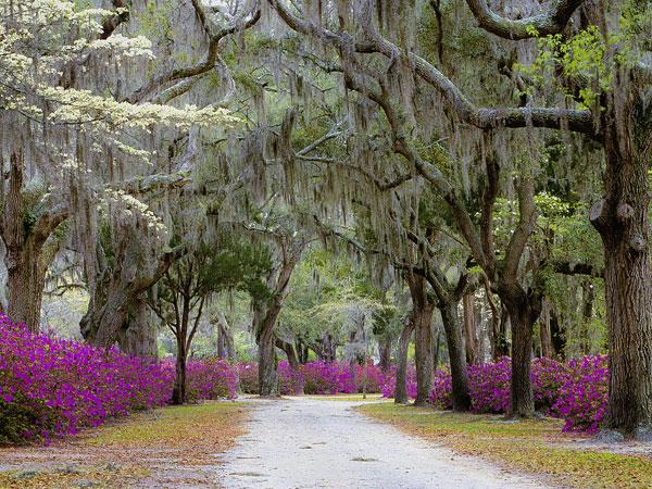 Savannah in Bloom, April 5-7