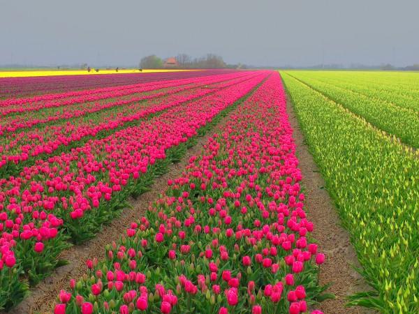 Storybook Holland