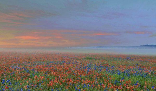 Focus on Flowers - Allen Rokach Photography