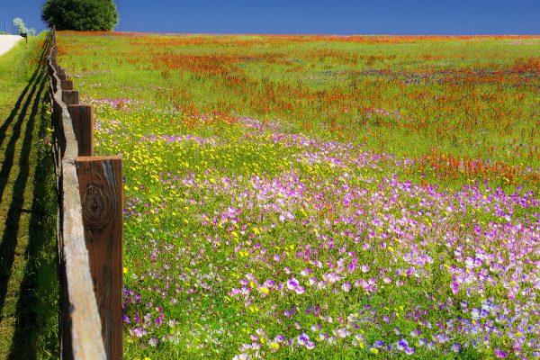 Wildflowers of Texas - Allen Rokach